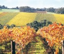 mornington-peninsula-winery-2948